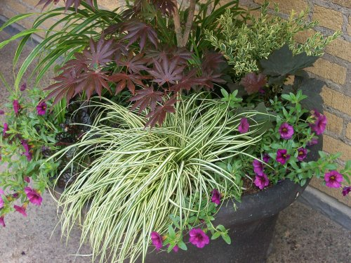 A second container planting.