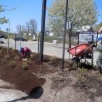 Spreading mulch